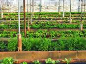 What Urban Agriculture? Types Benefits Agriculture