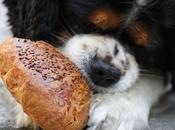 Dogs Bread? What's Good Canines When Comes Bread