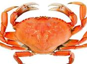 Dungeness Crab Snow