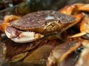 Acidification Pacific Ocean Even Dissolves Shells Dungeness Crabs