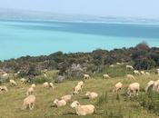 HIKING BIKING ZEALAND, Part Guest Post Cathy Mayone