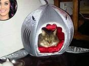 Shark Dome Keeps Kitty Purry Perfectly Pretty