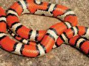 Snakes Make Good Pets?