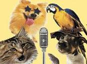 American Japanese) Pets Talent (VIDEOS)