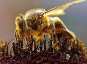 Featured Animal: Honey