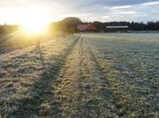 Transitions Meditative Morning Walks Over Field