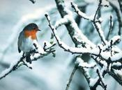 What Robins Winter?