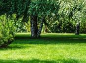 Tips Adding More Green Your Yard