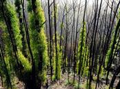 """""""Australia's Fire-Ravaged Forests Recovering. Ecologists Hope Lasts"""""""
