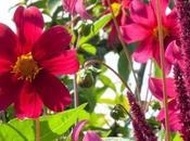 Getting Your Gardening