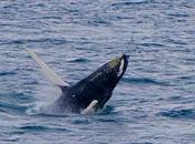 Where Best Places Whale Watching Australia?
