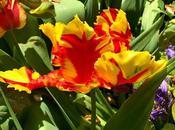 Conversion Parrot Tulips