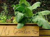 Ways Improve Your Garden
