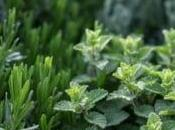 What Herbs Planted Together?