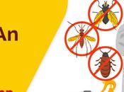 Comprehensive Guide Building Demand Pest Control