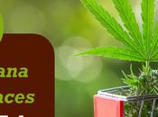 Marijuana Marketplaces That Will Take Places