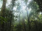 Tropical Rainforest Equivalent Football Pitch Vanished Every Seconds