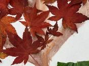 Create Autumn Winter Pictures