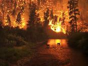 People Volunteer House Pets During Wildfire
