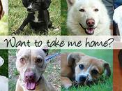 Dogs! Adoption!