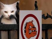 "Kitties: 'Beware Cat"" Signs"
