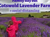 Visiting Cotswold Lavender Social Distancing June 2020 Review