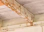 Termite Swarm Pest Control Baton Rouge, Louisiana