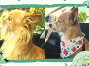 Before After: Meet This Month's Paws Reaction Featured Pets!