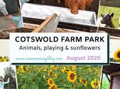 Cotswold Farm Park Post-lockdown August 2020
