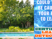 Could Trees Causing Your Pool Leak?