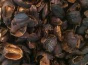 Flesh Koffee (Cáscara, Quishr)
