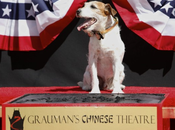 Uggie, Canine Star 'The Artist,' First Prints Cement