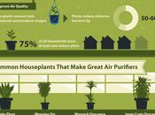 Benefits Trees Plants Your Home