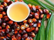 Environmental Impact Cooking Oils (And Palm Environment)