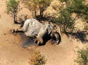 Researcher Believe They Know What Caused Mass Elephant Deaths Botswana