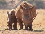 Botswana: Exciting Wildlife Will