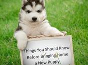 Things Should Know Before Bringing Home Puppy