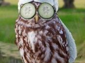 Tips Encouraging Owls Into Your Garden