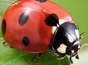 Ladybug Spirit Animal: Should Know