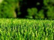 Long Does Milorganite Take Work Lawn?