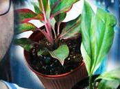 WATCH Bought Aglaonema Lipstick, Variegated Peace Lily, Jade Pothos Sansevieria Dragon Wings