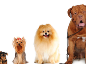 Breed Guide Cross Section Canines