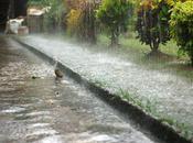 Monsoon Brings Close Nature, Love. Daffodius
