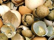 Shells Recyclable? (And Ways Reuse Shells)
