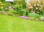 Expert Tips Applying Best Lawn Fertilizer