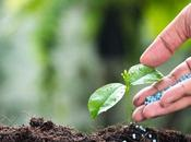 Boost Your Soil With Right Fertilizer