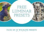 Free Luminar Presets Wildlife
