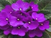 Type Flowers That Enhance Beauty Your Home Garden