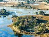 Discover Best Time Visit Okavango Delta