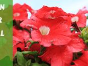 Bright, Beautiful Warm-Season Annuals Your Central Florida Garden